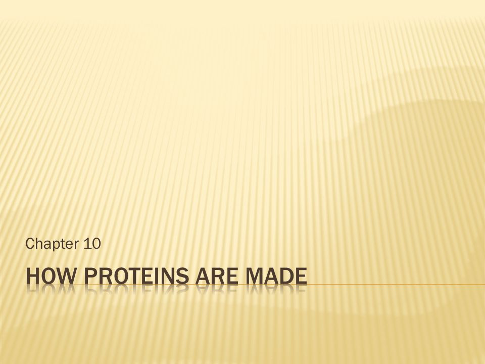 Chapter 10 How proteins are made