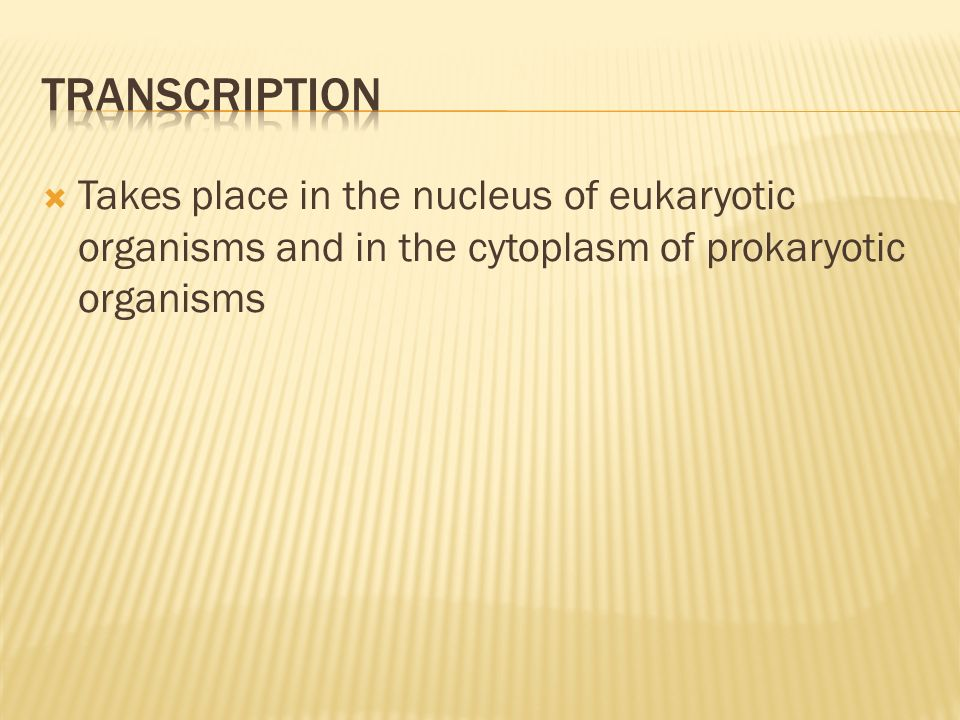 Transcription Takes place in the nucleus of eukaryotic organisms and in the cytoplasm of prokaryotic organisms.