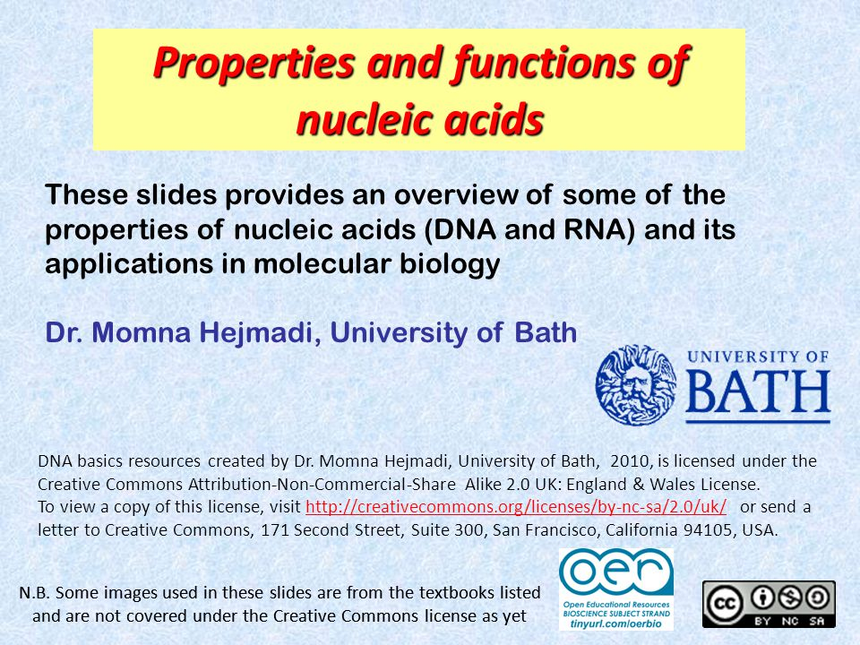 Properties and functions of nucleic acids