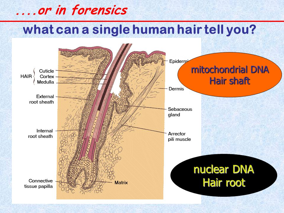 what can a single human hair tell you