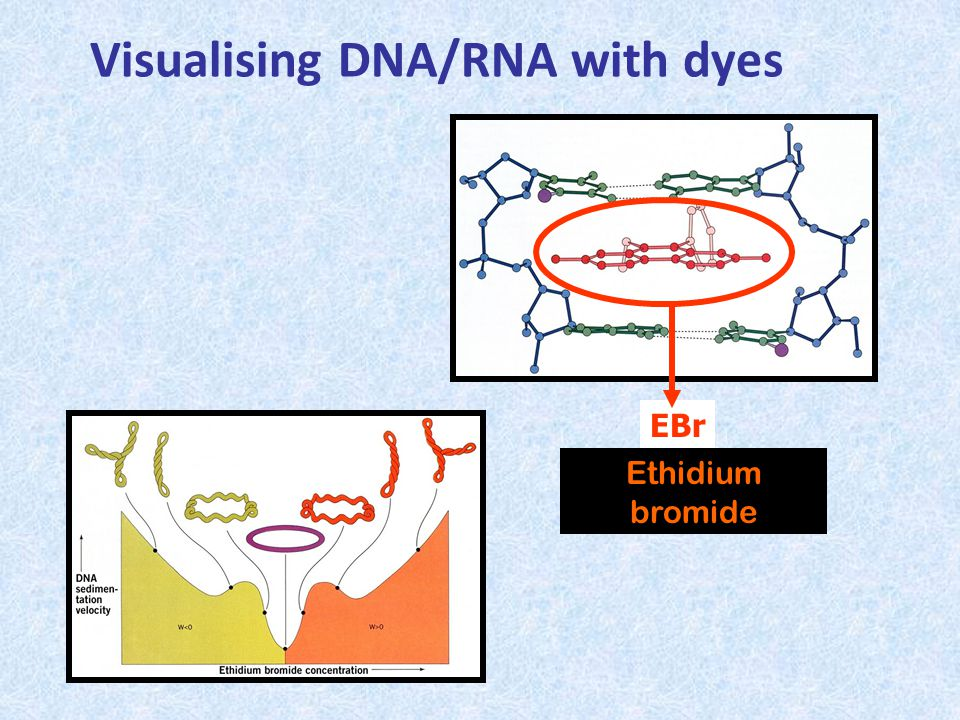 Visualising DNA/RNA with dyes