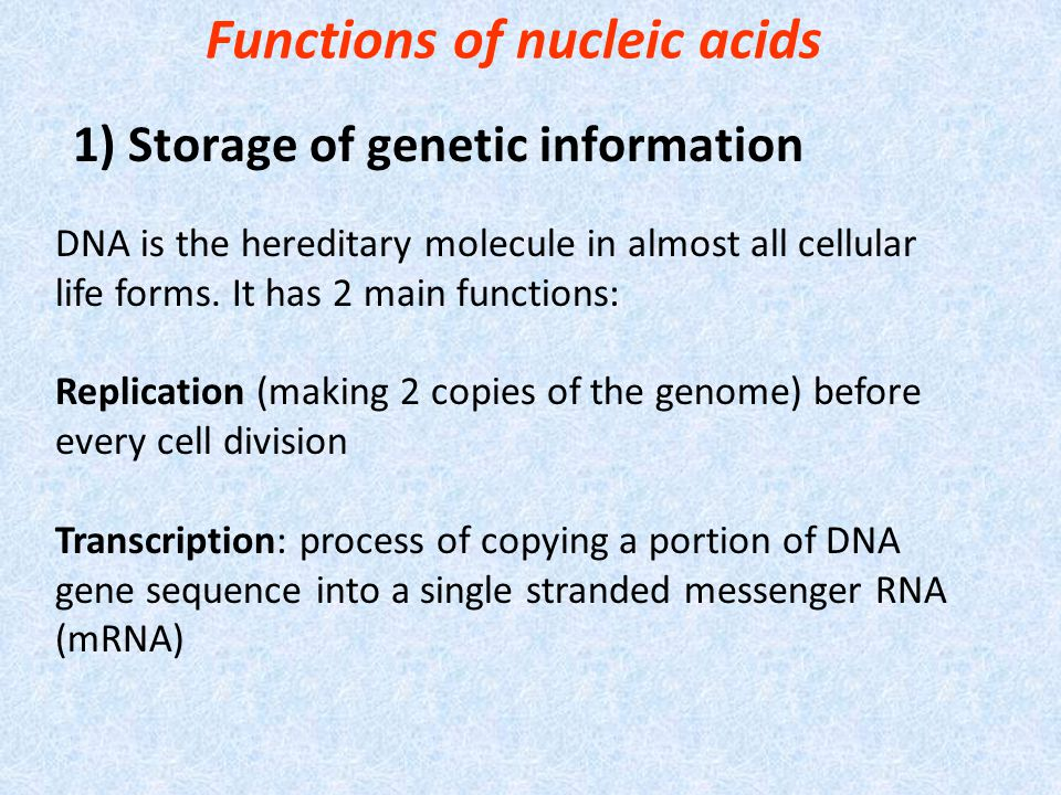 Functions of nucleic acids
