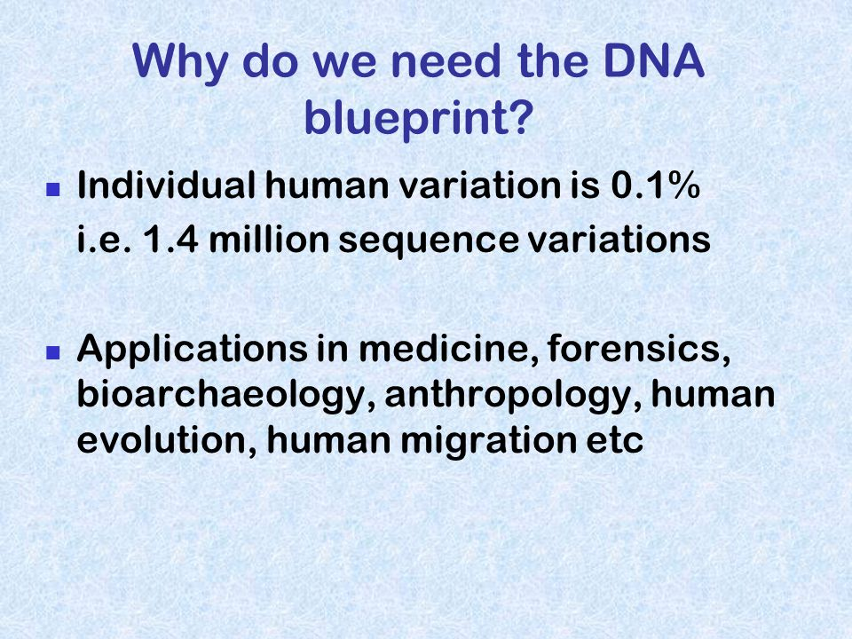 Why do we need the DNA blueprint