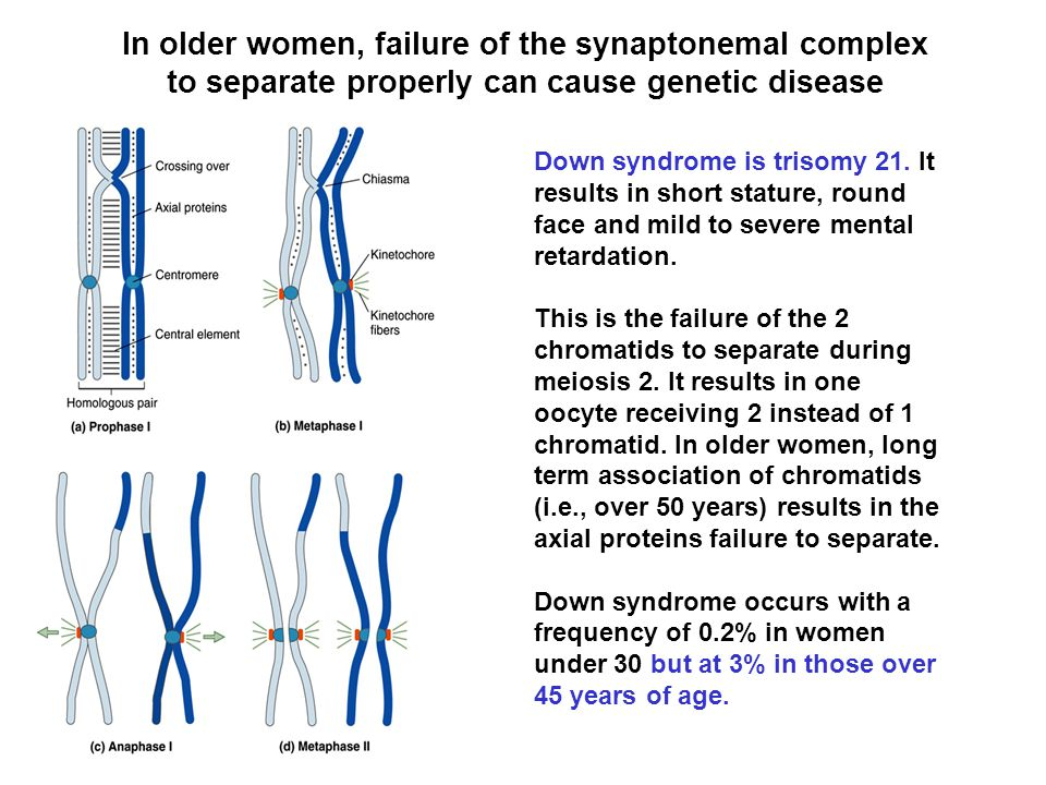 In older women, failure of the synaptonemal complex