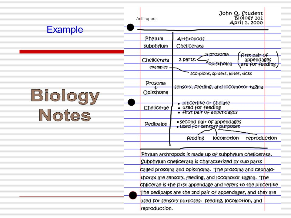 Anthropods Example Biology Notes
