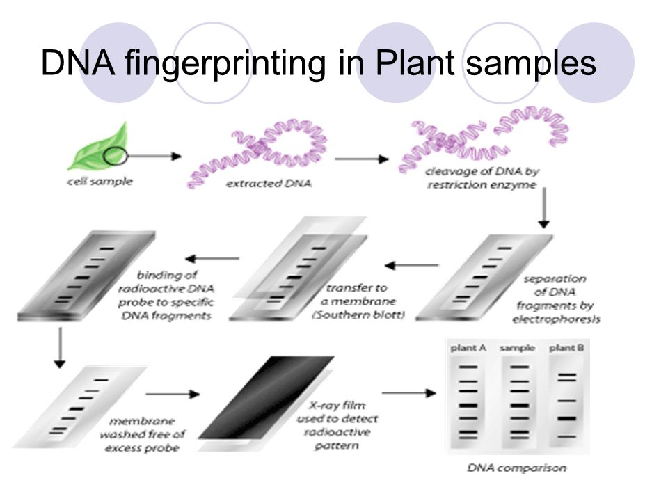 DNA fingerprinting in Plant samples