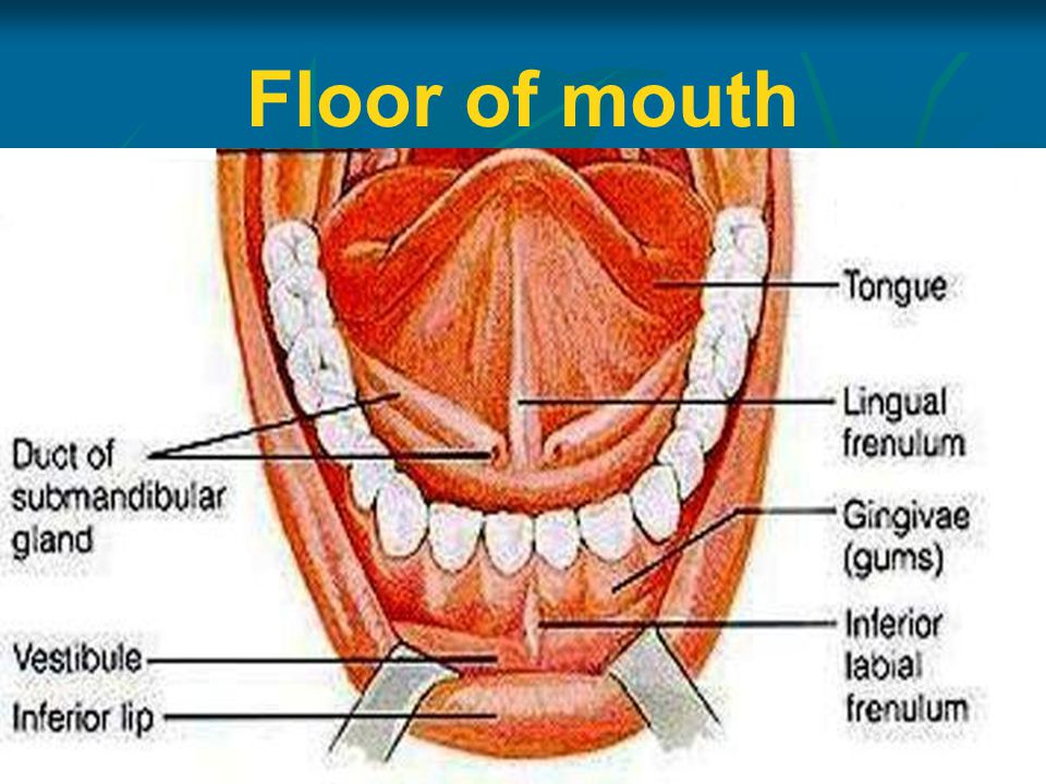 Anatomy Of Oral Cavity Pharynx Oesophagus Ppt Video Online Download