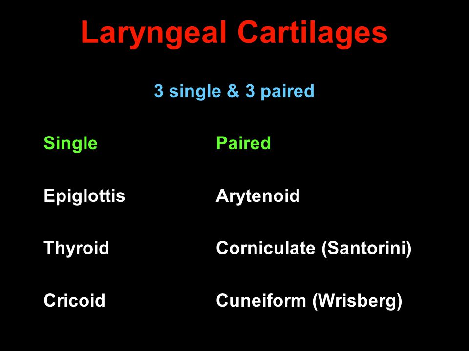 Laryngeal Cartilages 3 single & 3 paired Single Paired