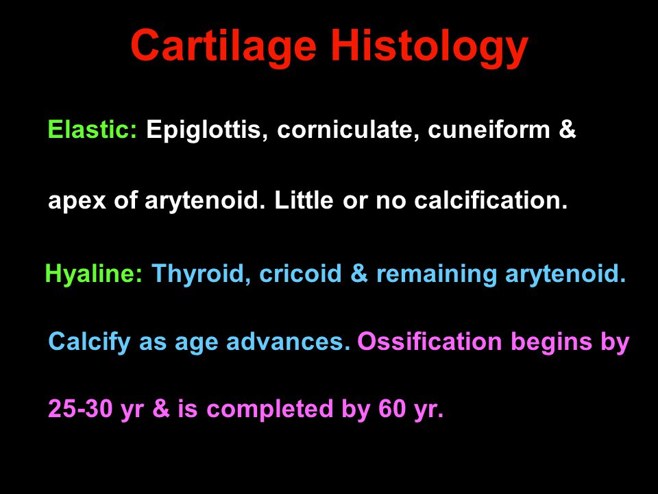 Cartilage Histology Elastic: Epiglottis, corniculate, cuneiform & apex of arytenoid. Little or no calcification.