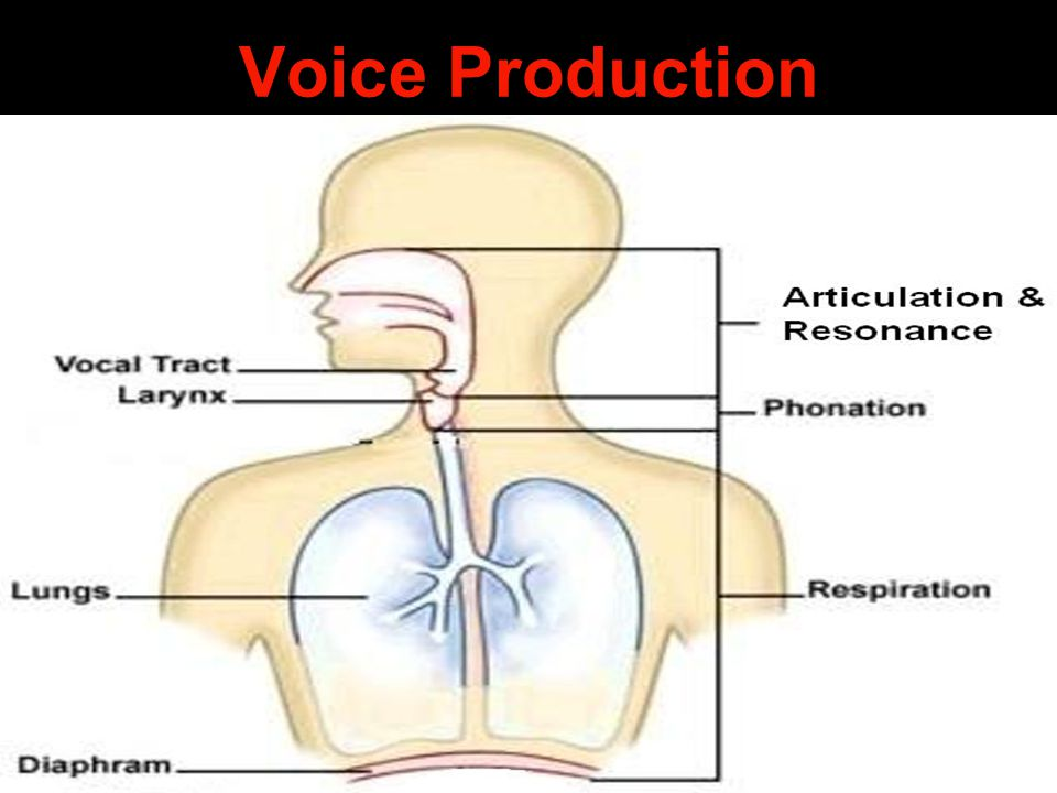 Voice Production