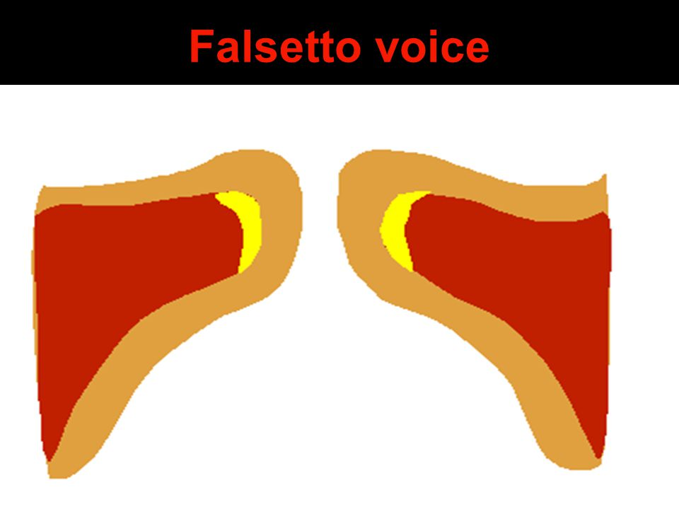 Falsetto voice