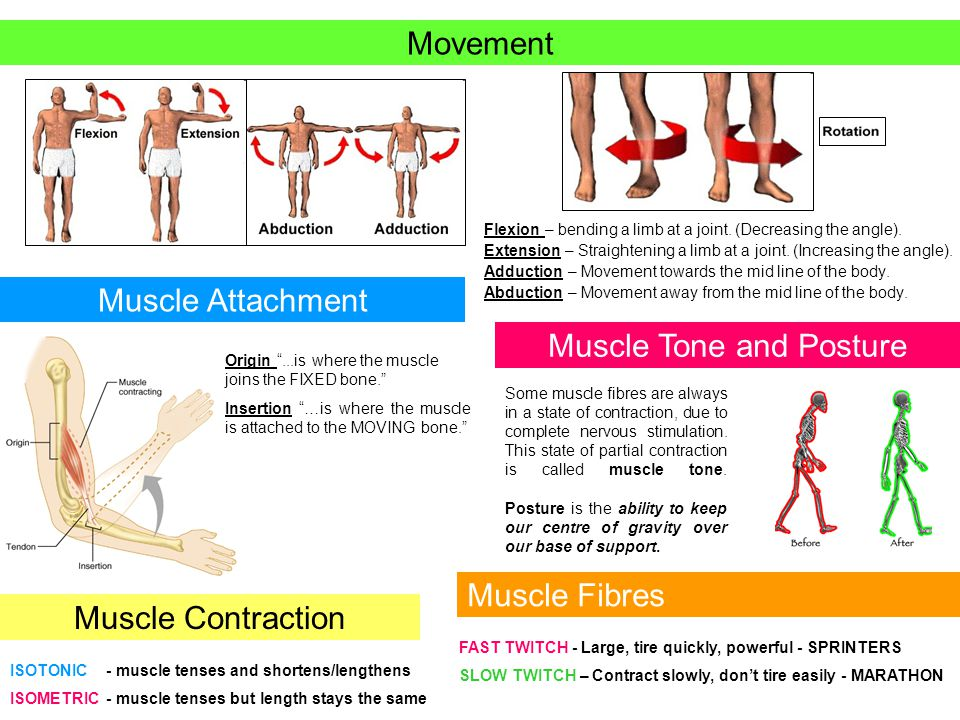 Muscle Tone and Posture