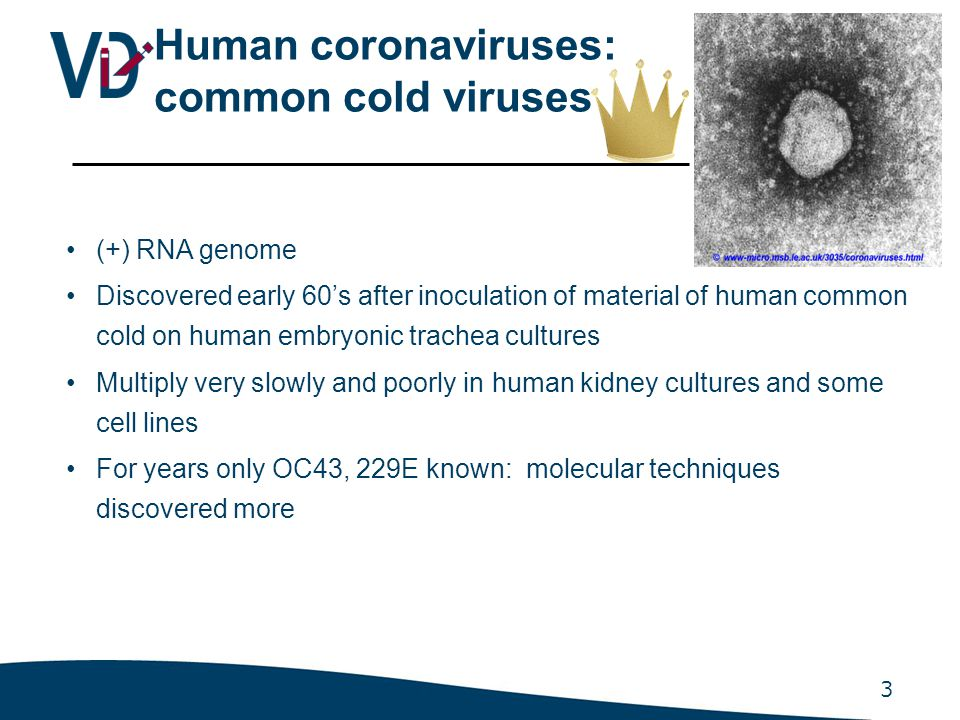 Novel coronavirus identified in SARS patients 2003: HCoV SARS