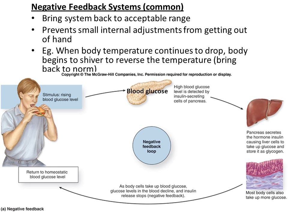 Negative Feedback Systems (common)