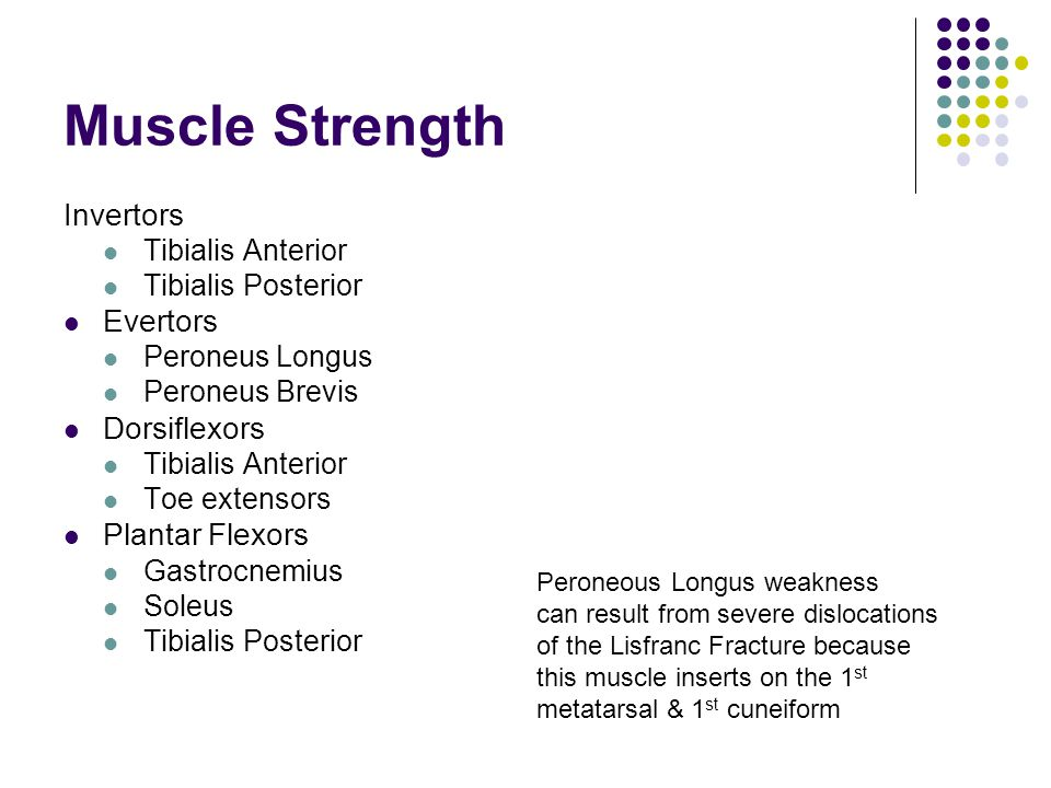 Muscle Strength Invertors Evertors Dorsiflexors Plantar Flexors