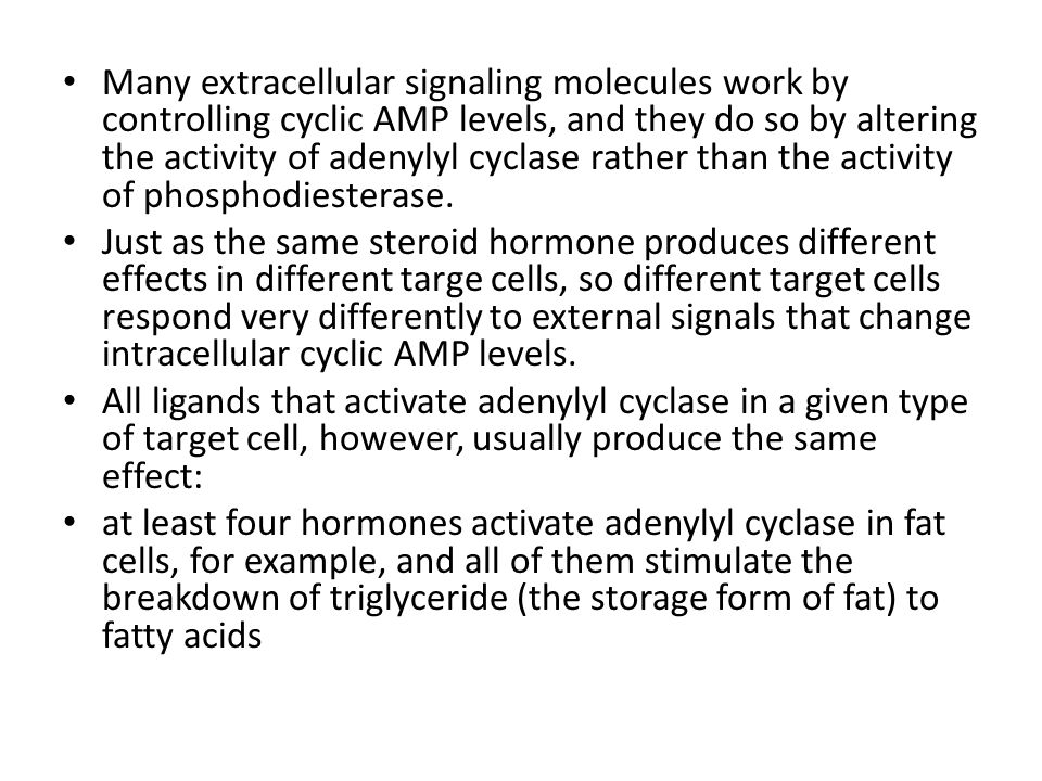 Many extracellular signaling molecules work by controlling cyclic AMP levels, and they do so by altering the activity of adenylyl cyclase rather than the activity of phosphodiesterase.
