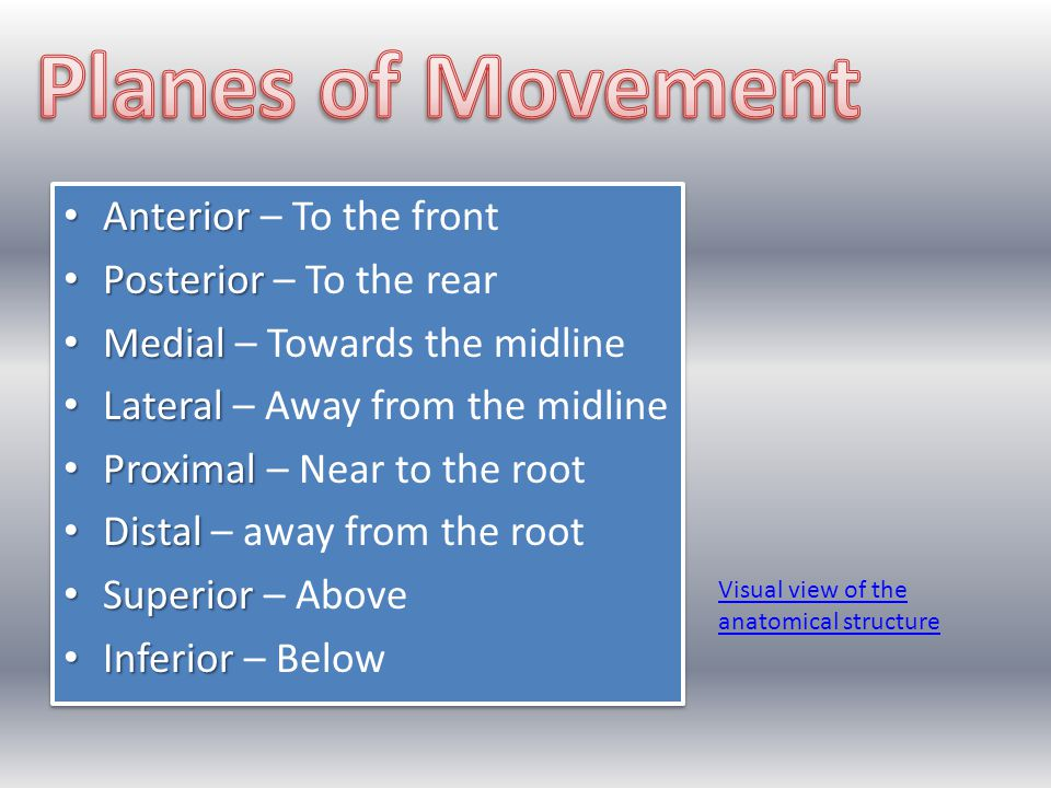 Planes of Movement Anterior – To the front Posterior – To the rear