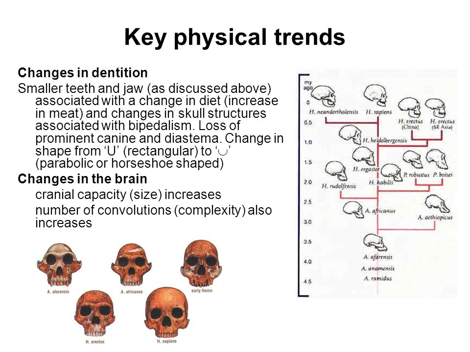 Key physical trends Changes in dentition