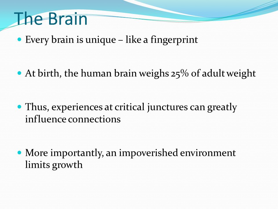 The Brain Every brain is unique – like a fingerprint