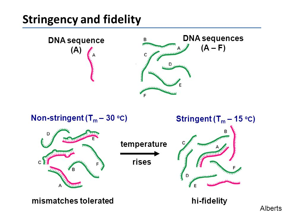 Stringency and fidelity