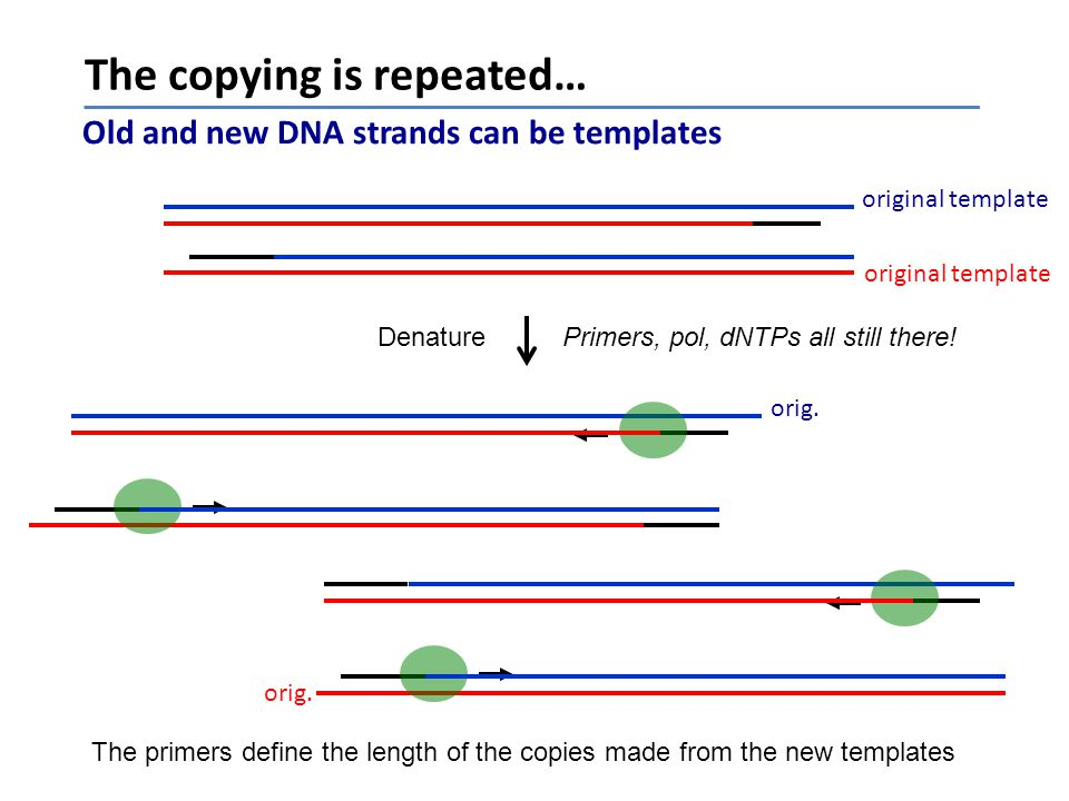 The copying is repeated…