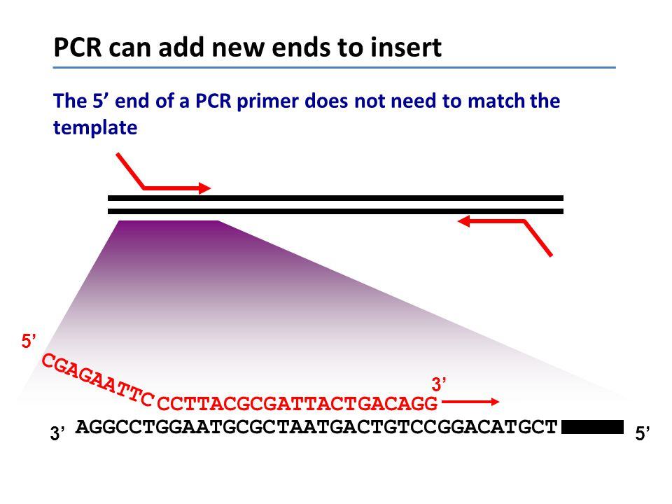PCR can add new ends to insert