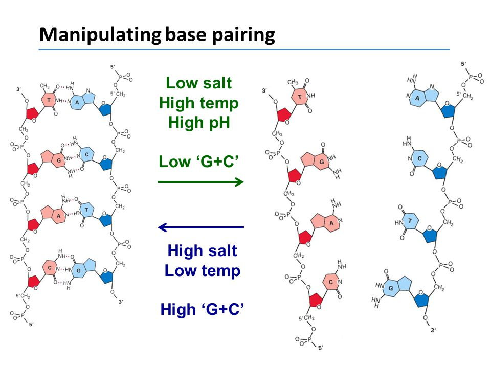 Manipulating base pairing