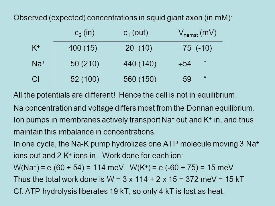 Observed (expected) concentrations in squid giant axon (in mM):