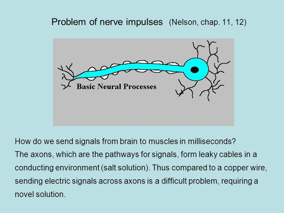 Problem of nerve impulses (Nelson, chap. 11, 12)