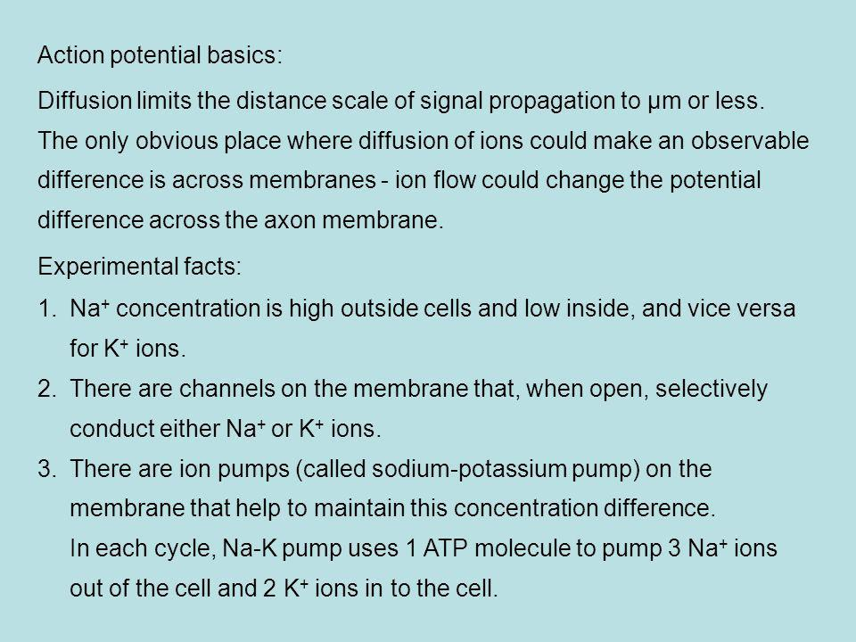 Action potential basics:
