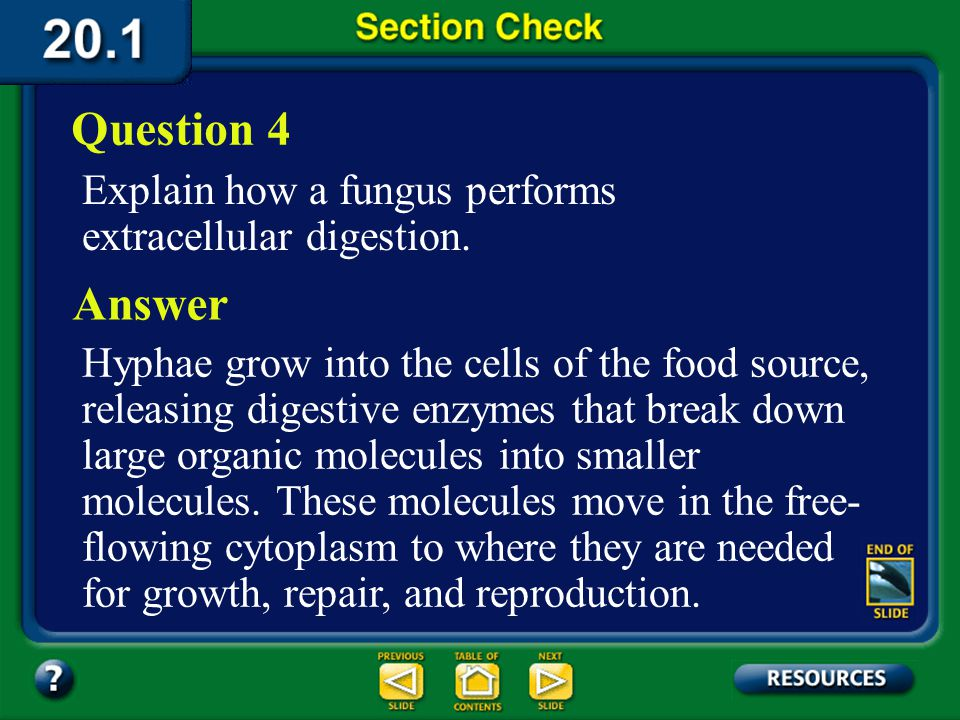 Question 4 Explain how a fungus performs extracellular digestion. Answer.