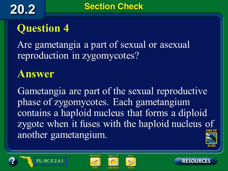 Question 4 Are gametangia a part of sexual or asexual reproduction in zygomycotes Answer.