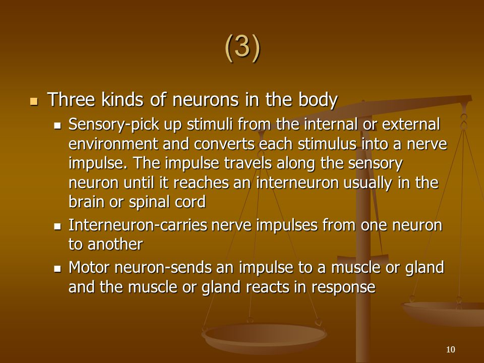 (3) Three kinds of neurons in the body