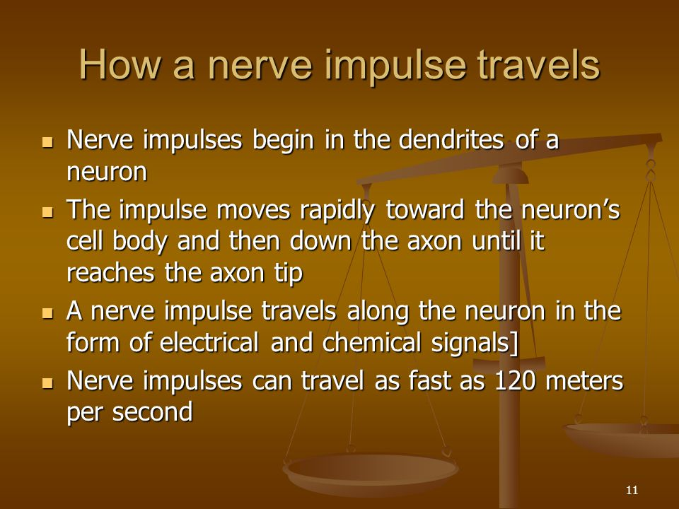How a nerve impulse travels