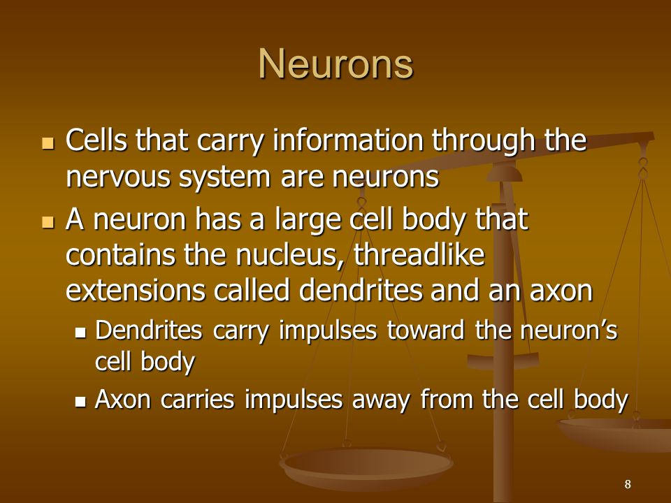 Neurons Cells that carry information through the nervous system are neurons.