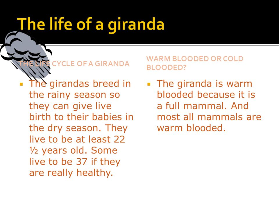 The life of a giranda The life cycle of a giranda. Warm blooded or cold blooded