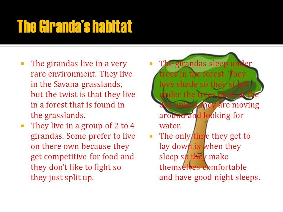 The Giranda's habitat