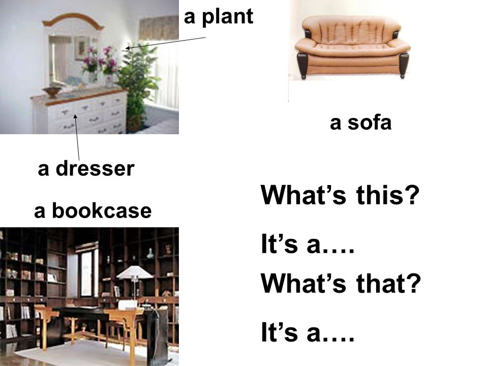 What's this It's a…. What's that It's a…. a plant a sofa a dresser
