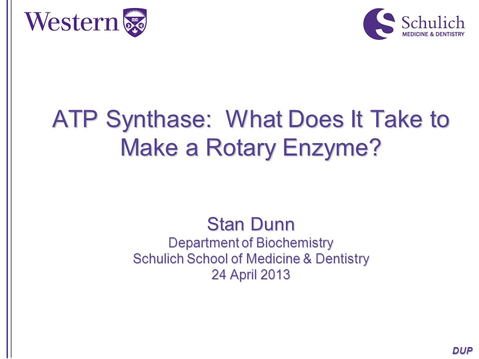 ATP Synthase: What Does It Take to Make a Rotary Enzyme