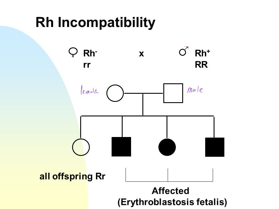 Rh Incompatibility Rh- x Rh+ rr RR all offspring Rr Affected