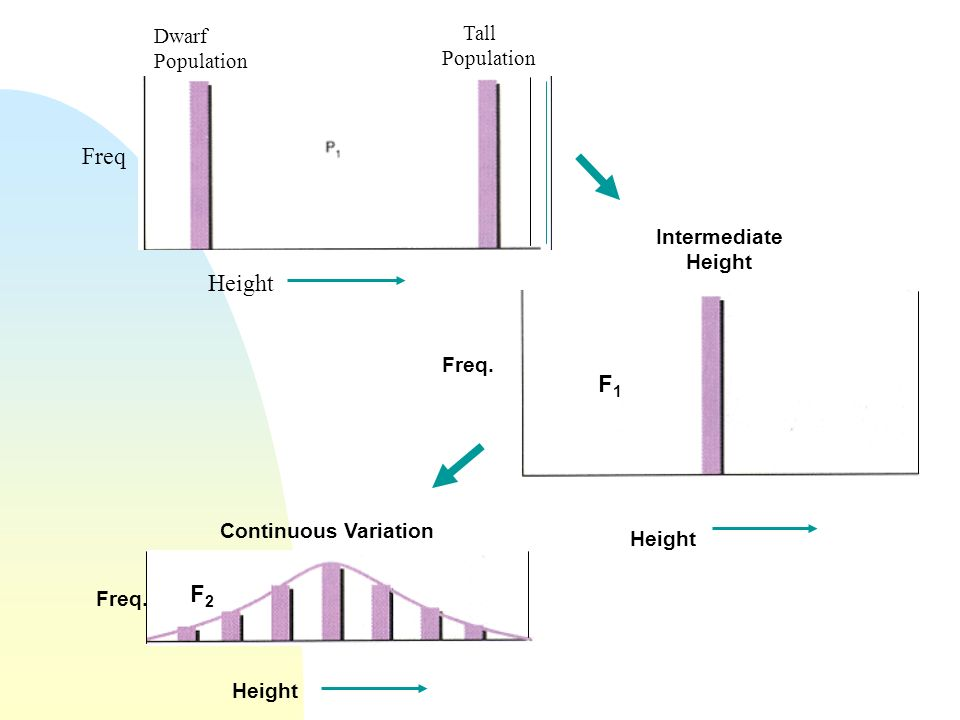 Freq Height F1 F2 Tall Population Dwarf Population Intermediate Height