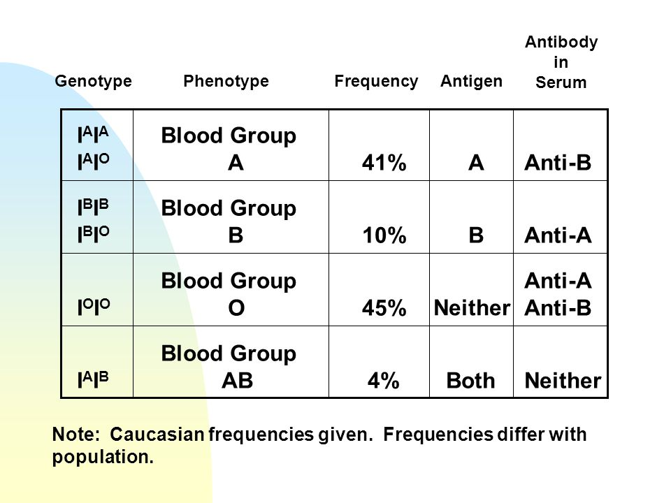 IAIA IAIO Blood Group A 41% A Anti-B IBIB IBIO Blood Group B 10% B