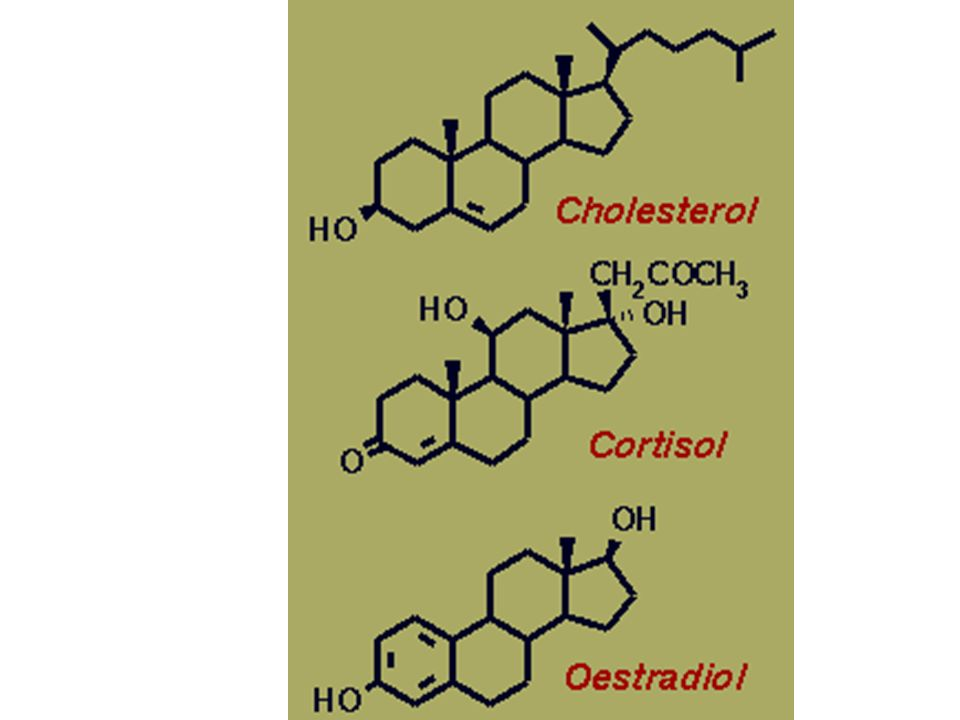 Cholesterole – where all steroid hormone derived.