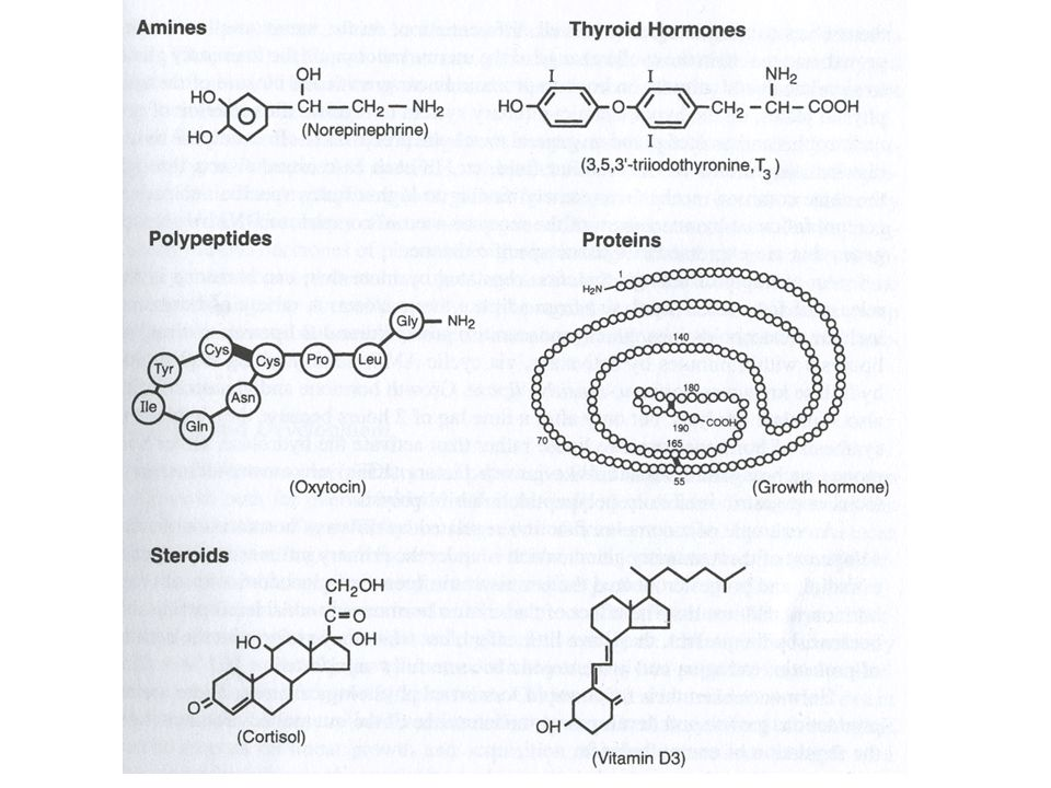Amines – from tyrosine Thyroid – made in various places. Note the iodines, that's what differentiates T1, T2, T3… etc.