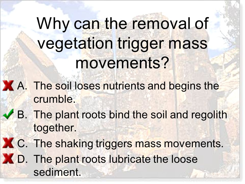 Why can the removal of vegetation trigger mass movements