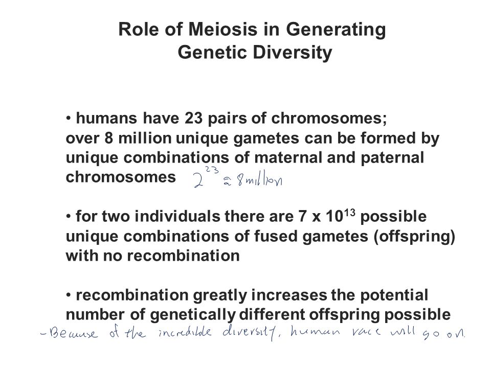 Role of Meiosis in Generating