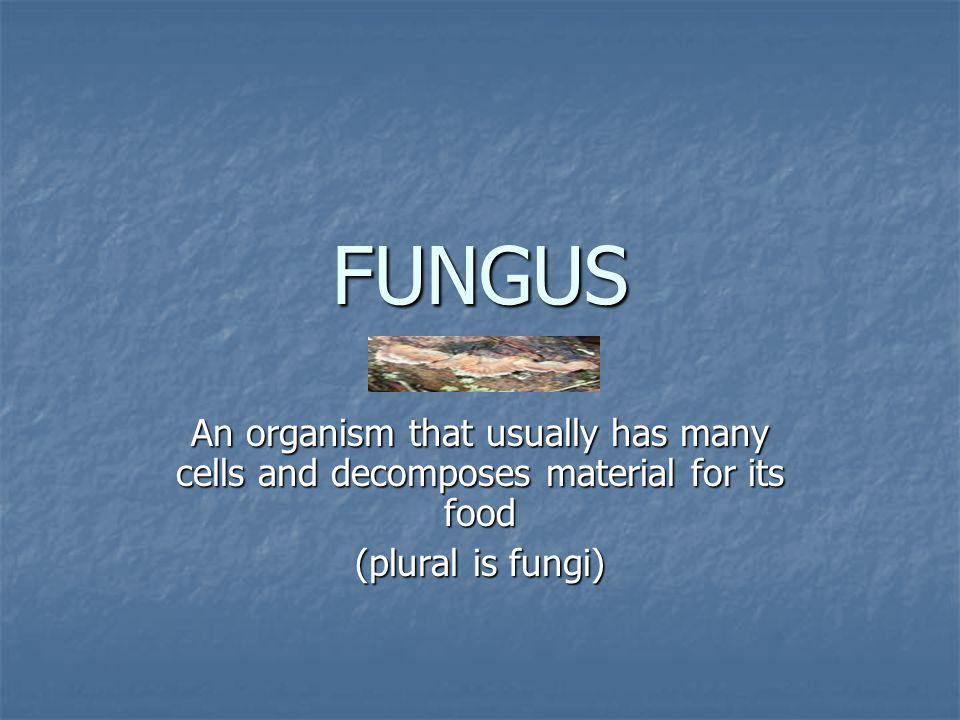 FUNGUS An organism that usually has many cells and decomposes material for its food.