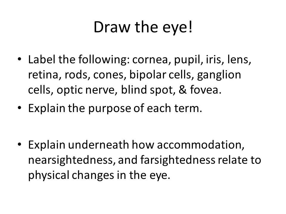 Draw the eye! Label the following: cornea, pupil, iris, lens, retina, rods, cones, bipolar cells, ganglion cells, optic nerve, blind spot, & fovea.