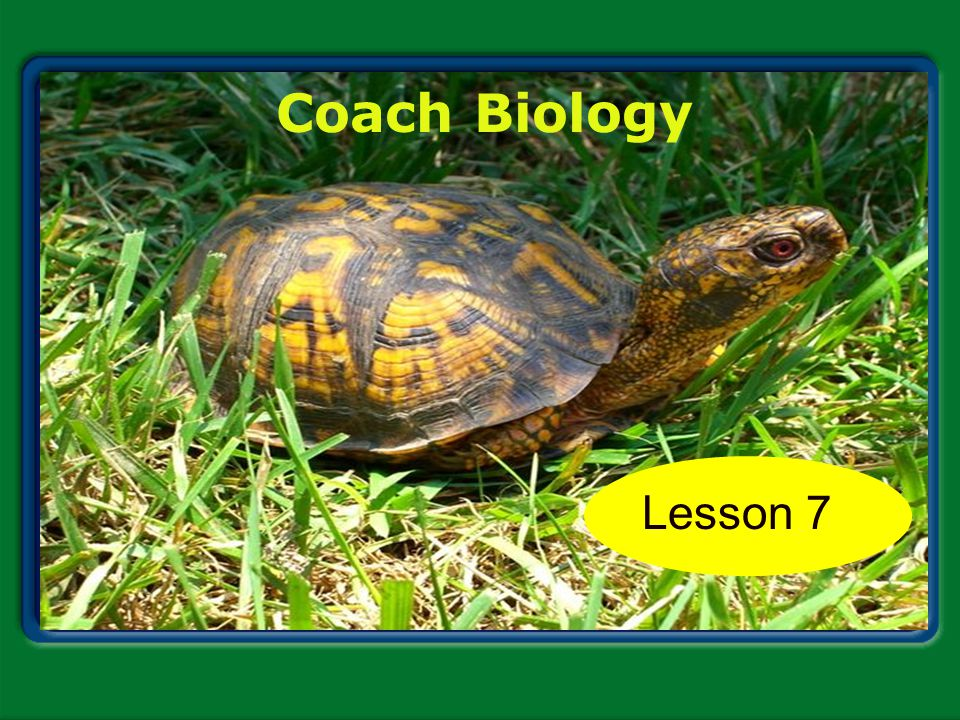 Coach Biology Chapter 1 Lesson 7