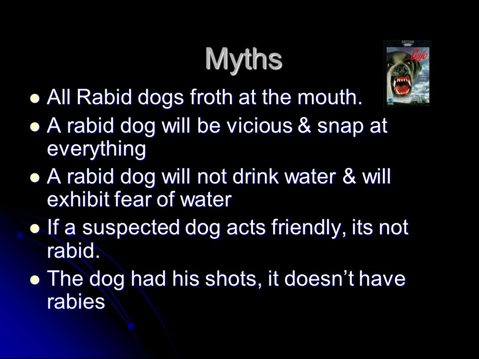 Myths All Rabid dogs froth at the mouth.